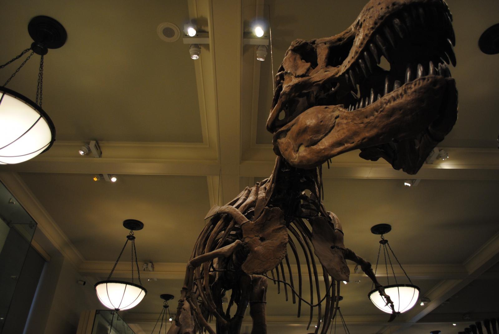 Dinosaurio en el Museo de Historia Natural de Nueva York