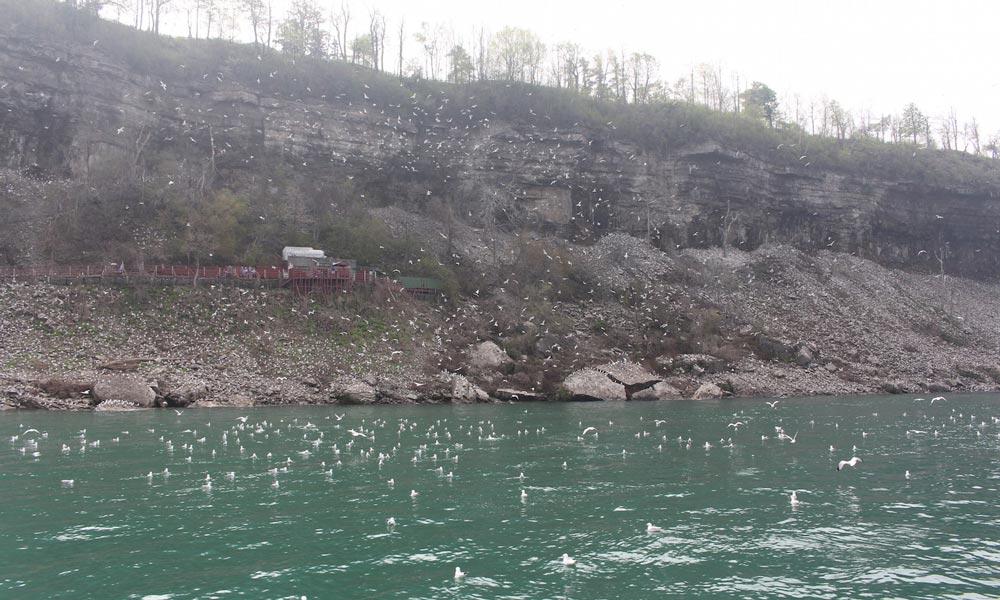 gaviotas en las cascadas del niagara