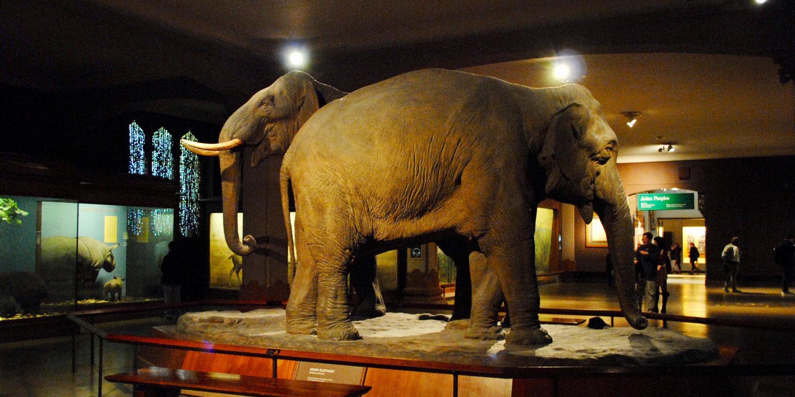 Museo De Historia Natural De Nueva York Un Imprescindible En Tu Viaje