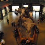 5 motivos para visitar el Museo de Historia Natural de Nueva York