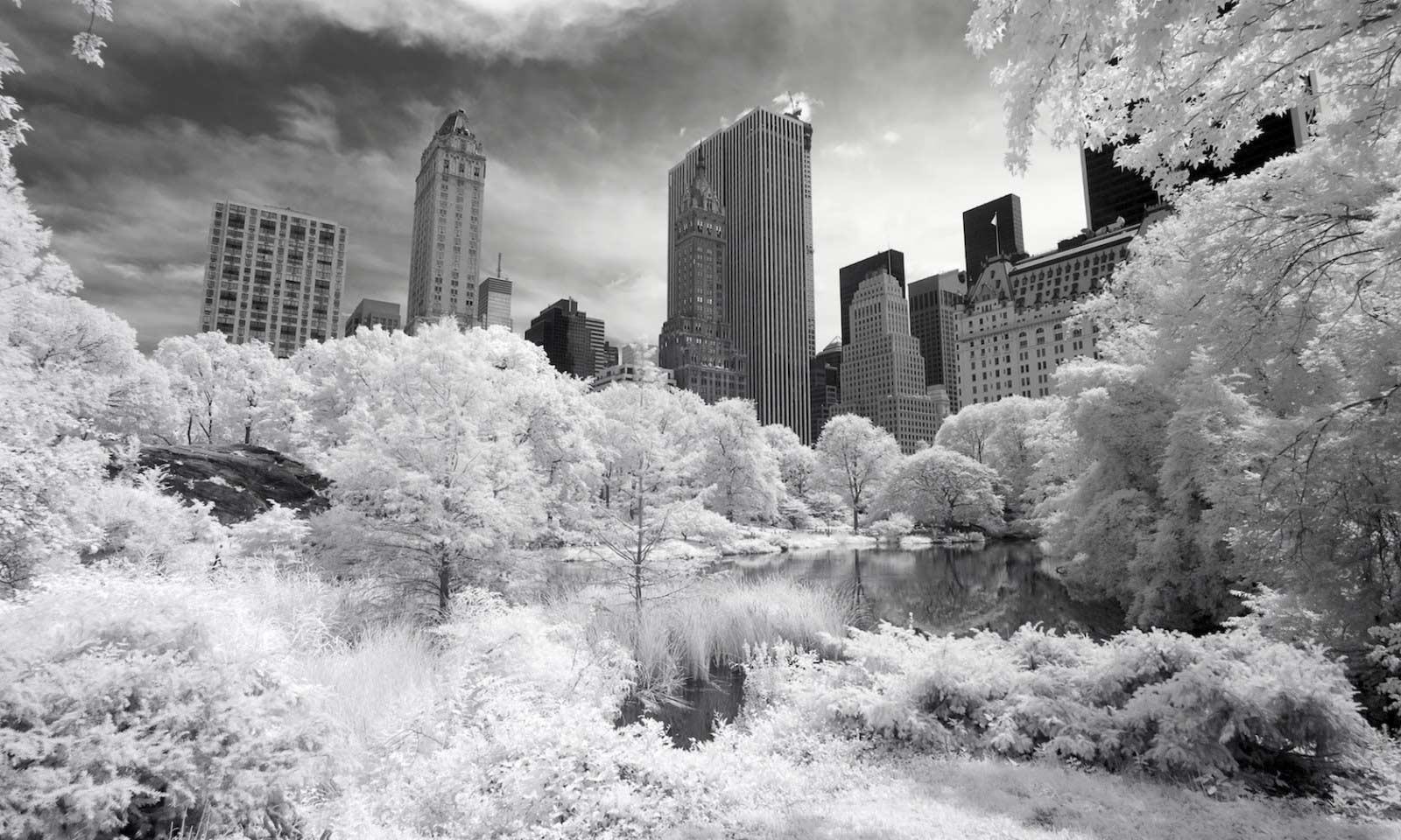 schwarz/weiß bild central park