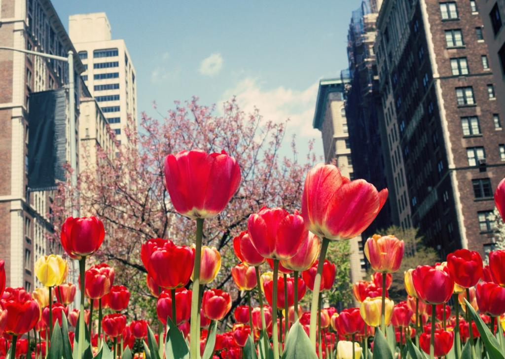 Dia de la Madre: Nueva York en mayo