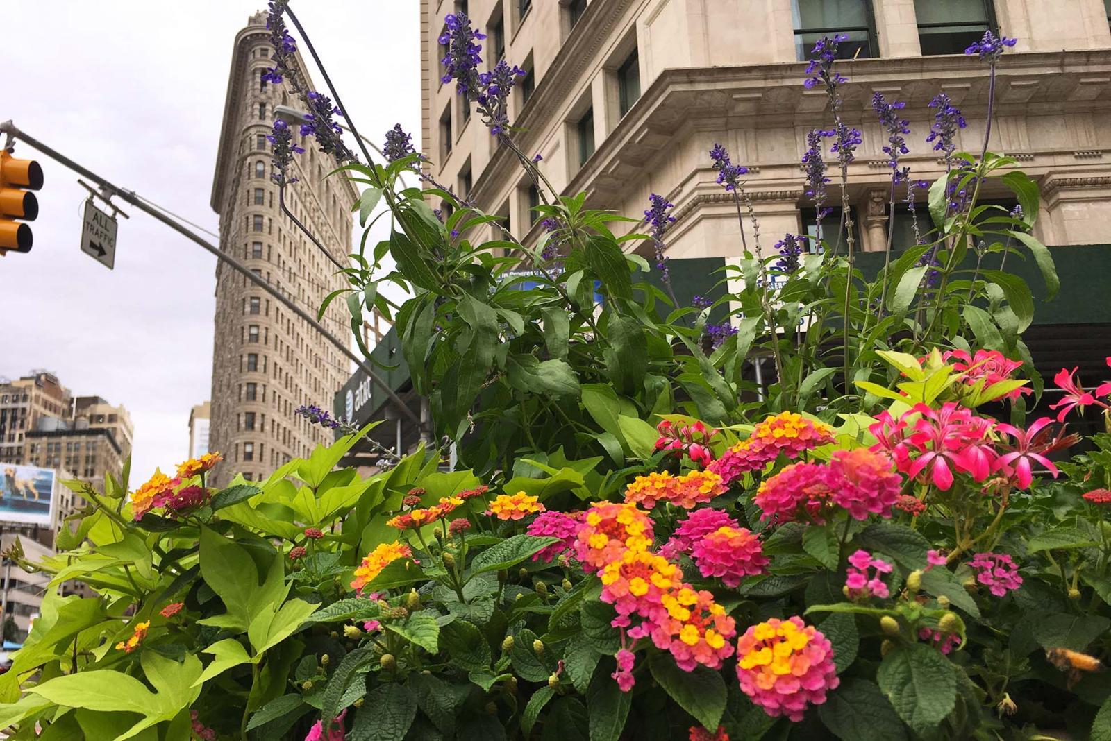Día de la madre en Nueva York