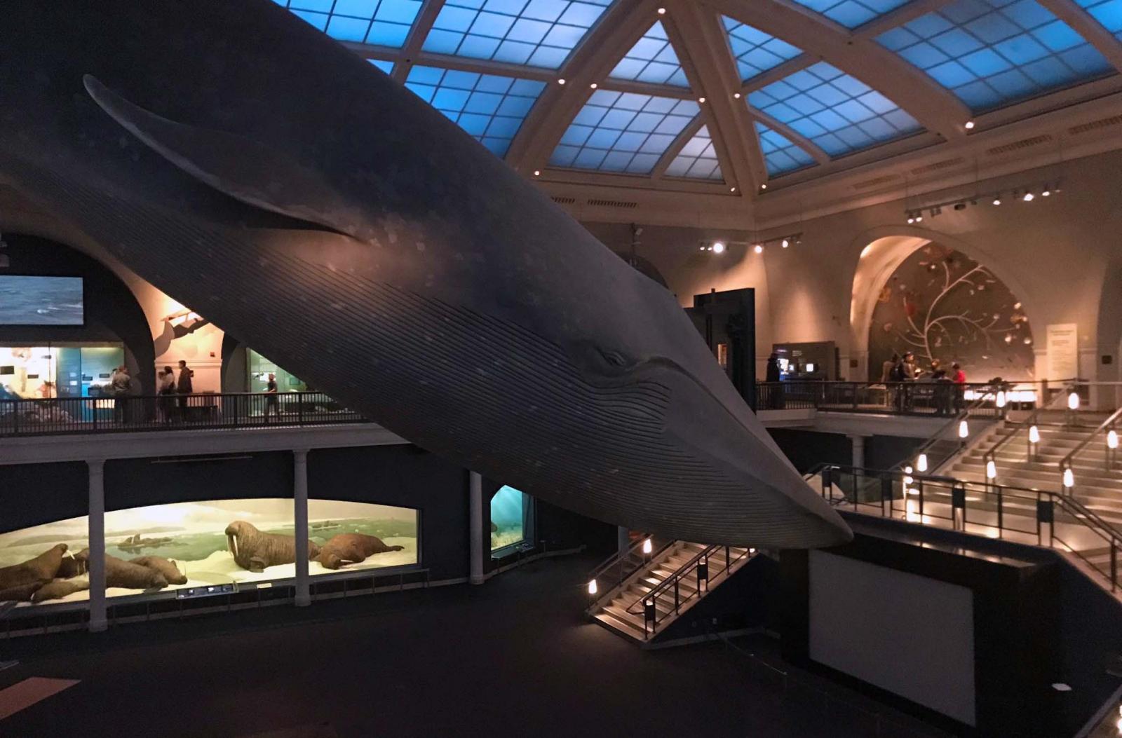 Natural History Museum con el CityPass
