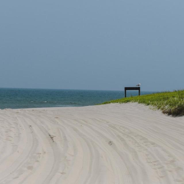 Jersey Shore: La guía definitiva que no te puedes perder